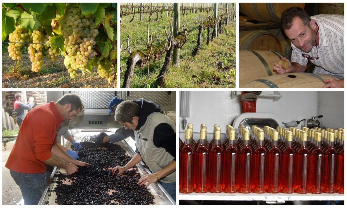Quatre saisons dans le vignoble charentais de Pascal Gonthier