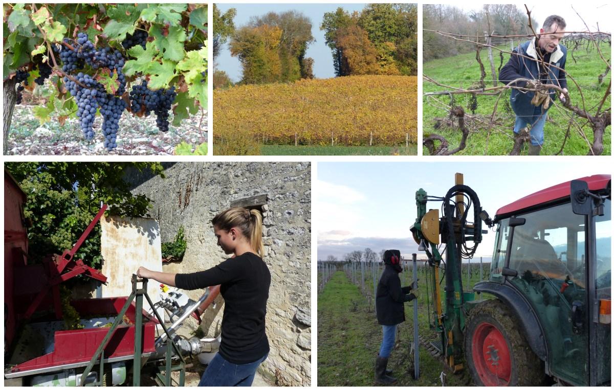Pascal Gonthier Vigneron, un savoir-faire ancestral dans les vignobles charentais