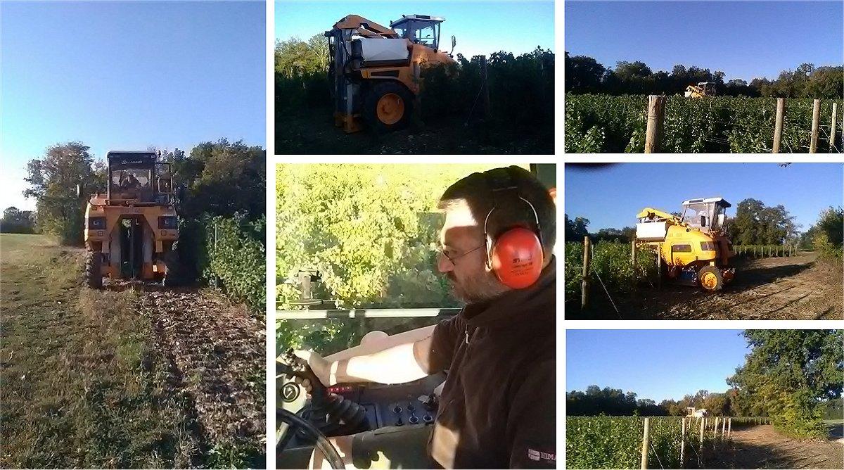 Les premières étapes de la fabrication du vin