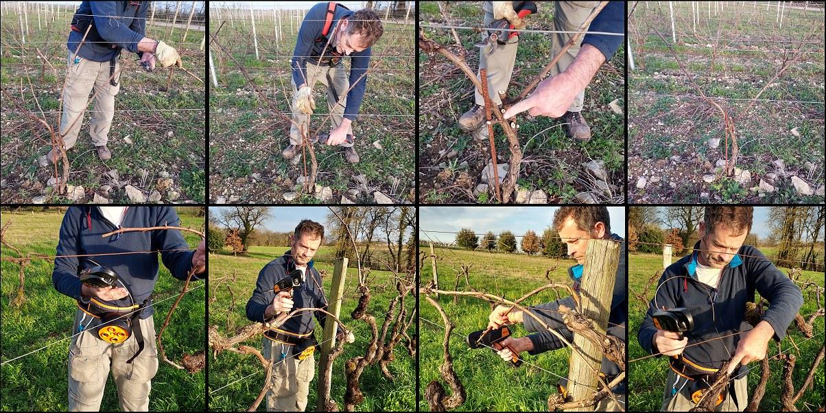 Le travail des vignes en fin d'hiver