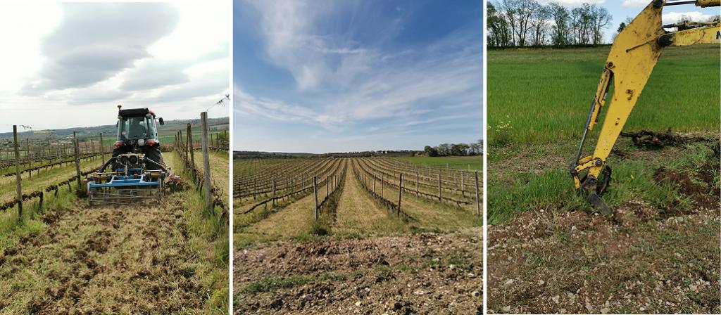 Travail de printemps dans les vignes en Charente
